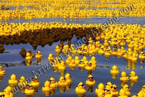 Rubber ducky carnival game Rental Phoenix Arizona