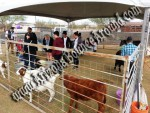 Petting Zoo's for Hire, petting zoo rentals, Phoenix, Scottsdale AZ