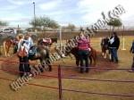 Pony Rides for Hire, Pony Ride rentals, Phoenix, Scottsdale AZ