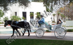 Wedding Carriage rentals, Horse drawn carriage rides, Scottsdale AZ, Phoenix