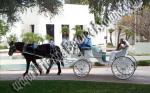 Wedding Carriage rentals, Horse drawn carriage rides, Scottsdale AZ, Phoenix